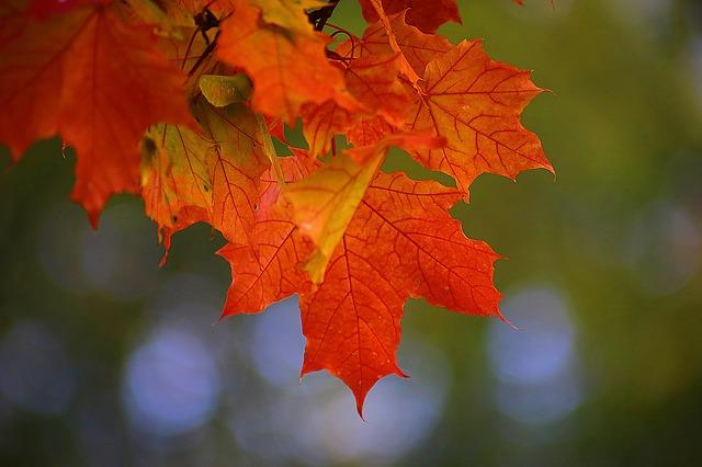 autumn-2726242_640